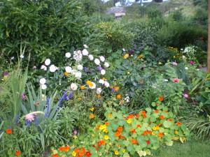 mantenimiento-y-conservacion-de-jardines