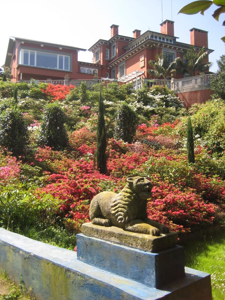 azaleas-flor-jardines-el-chano