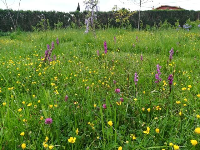 prado florido en abril