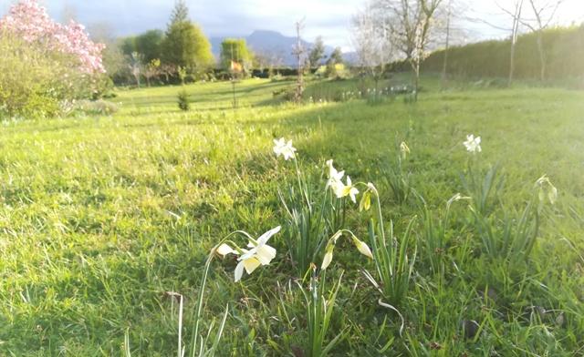 Prado florido en marzo