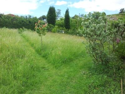 Caminos segados en el prado alto.
