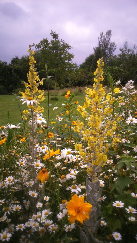Pradera de flores en Junio