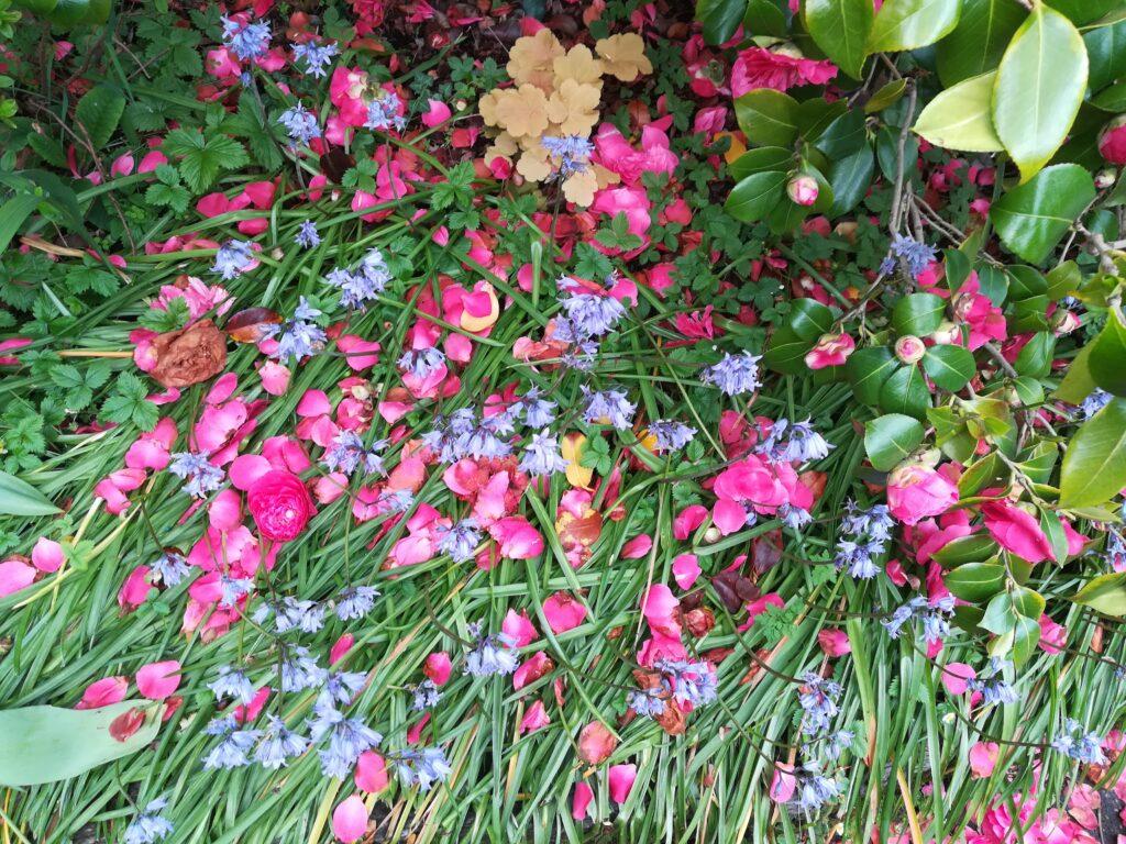 Otoño jardín 16