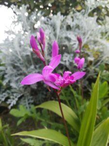 Otoño jardín 14