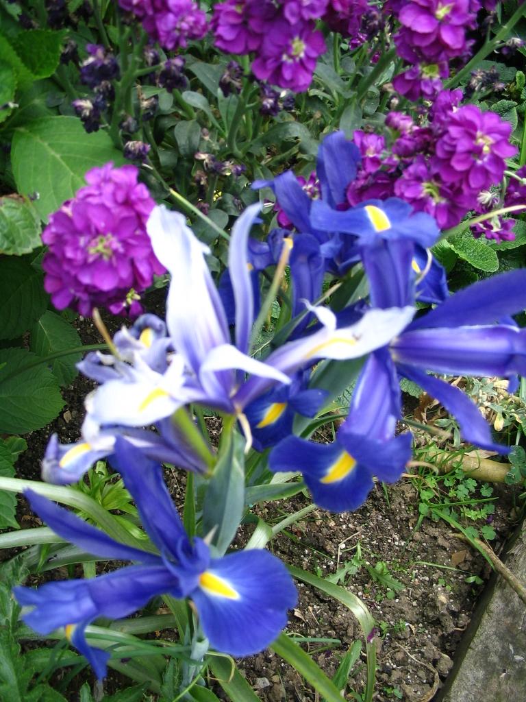 Otoño jardín 17