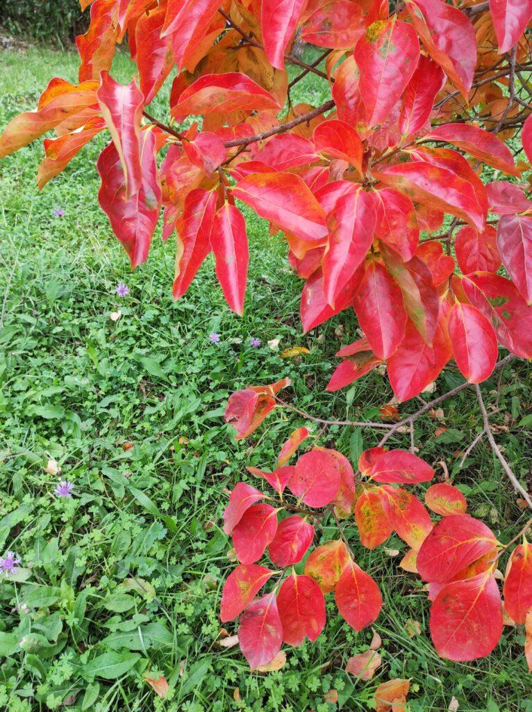 otono-jardin-2