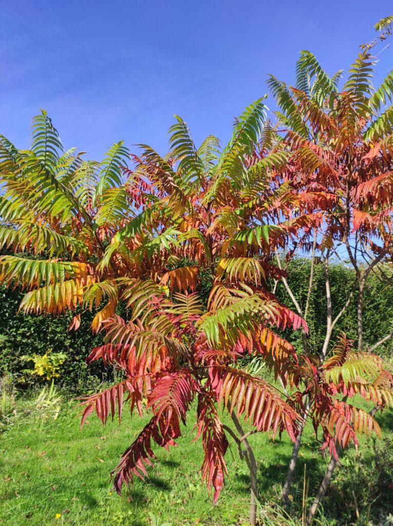 otoño jardín 3